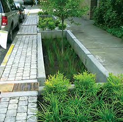 Stormwater_Planter